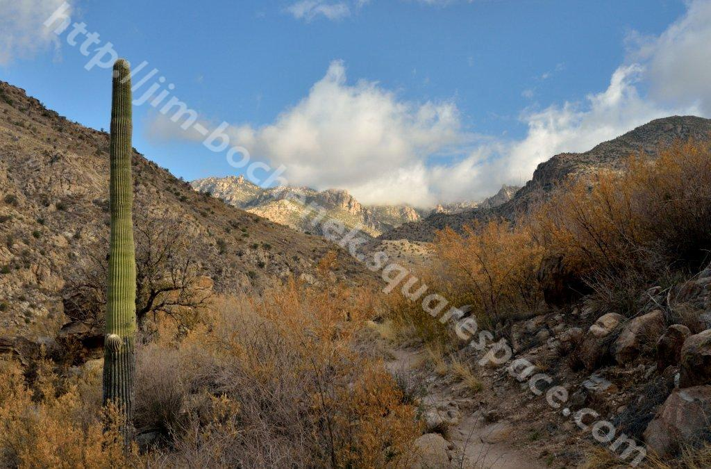 Hutch's Pool Trail - Sabino Canyon 5-11