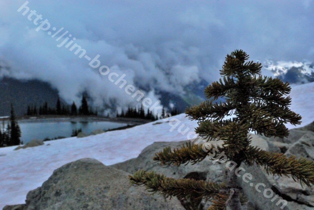 Small Tree & Snowy Scenery Whistler 7-12.jpg