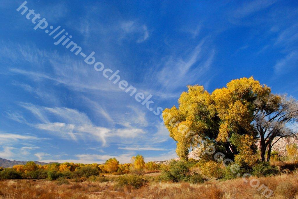 Cottonwood & Sedona 11-09 028 (2).jpg