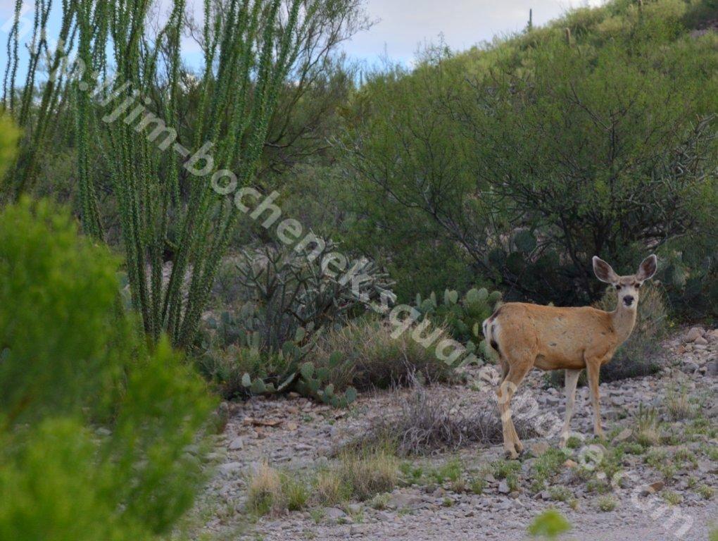 Tucson 9-11_005_03.jpg
