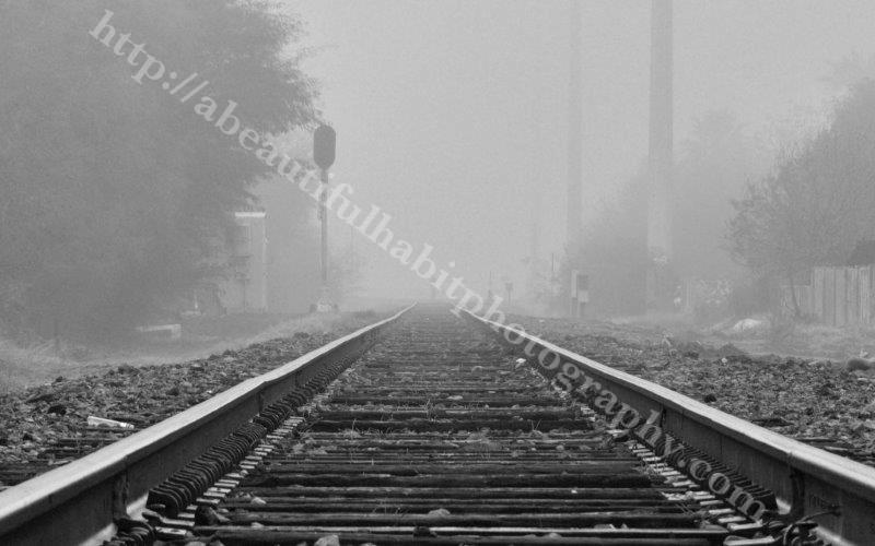 Fog 2-1-15_14.jpg