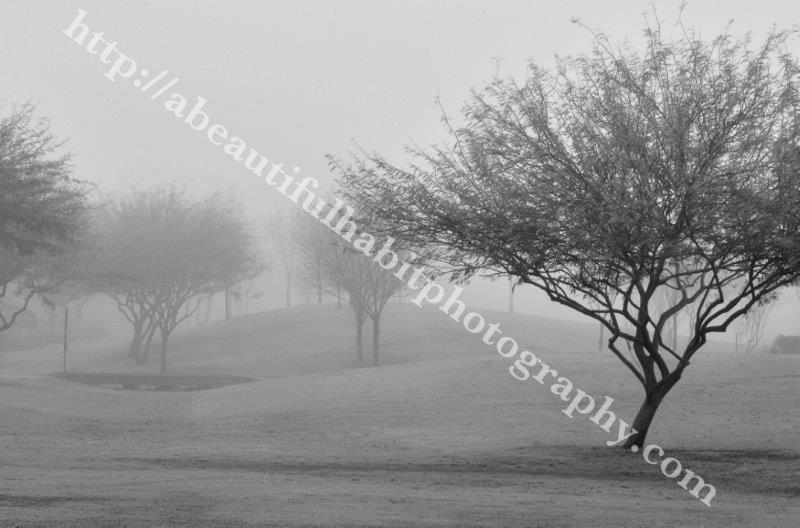 Fog 2-1-15_47.jpg