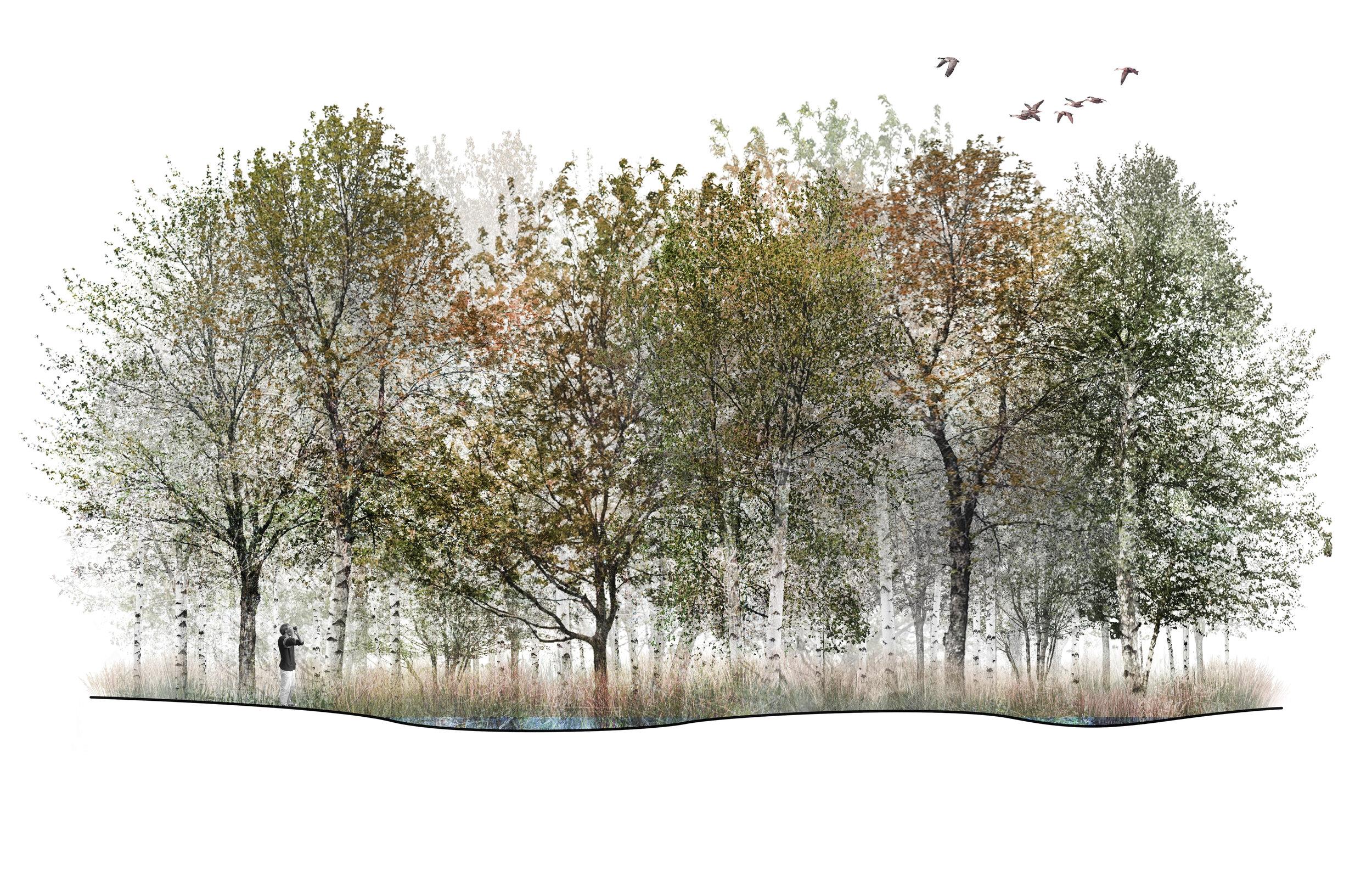 Birch/Maple Swamp