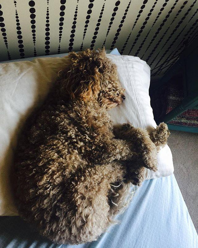 Melting hearts since 2014! ❤️❤️🐻❤️❤️#slumberparty #dogsofinstagram #welovedogs #dogwalking #philapets #philly #friskyinphilly #instacute