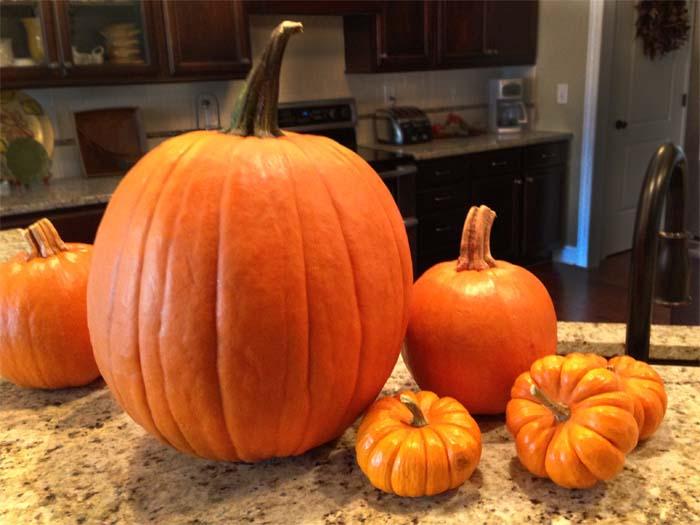 2.5.fresh-pumpkins-juvenilehalldesign.com-blog.jpg