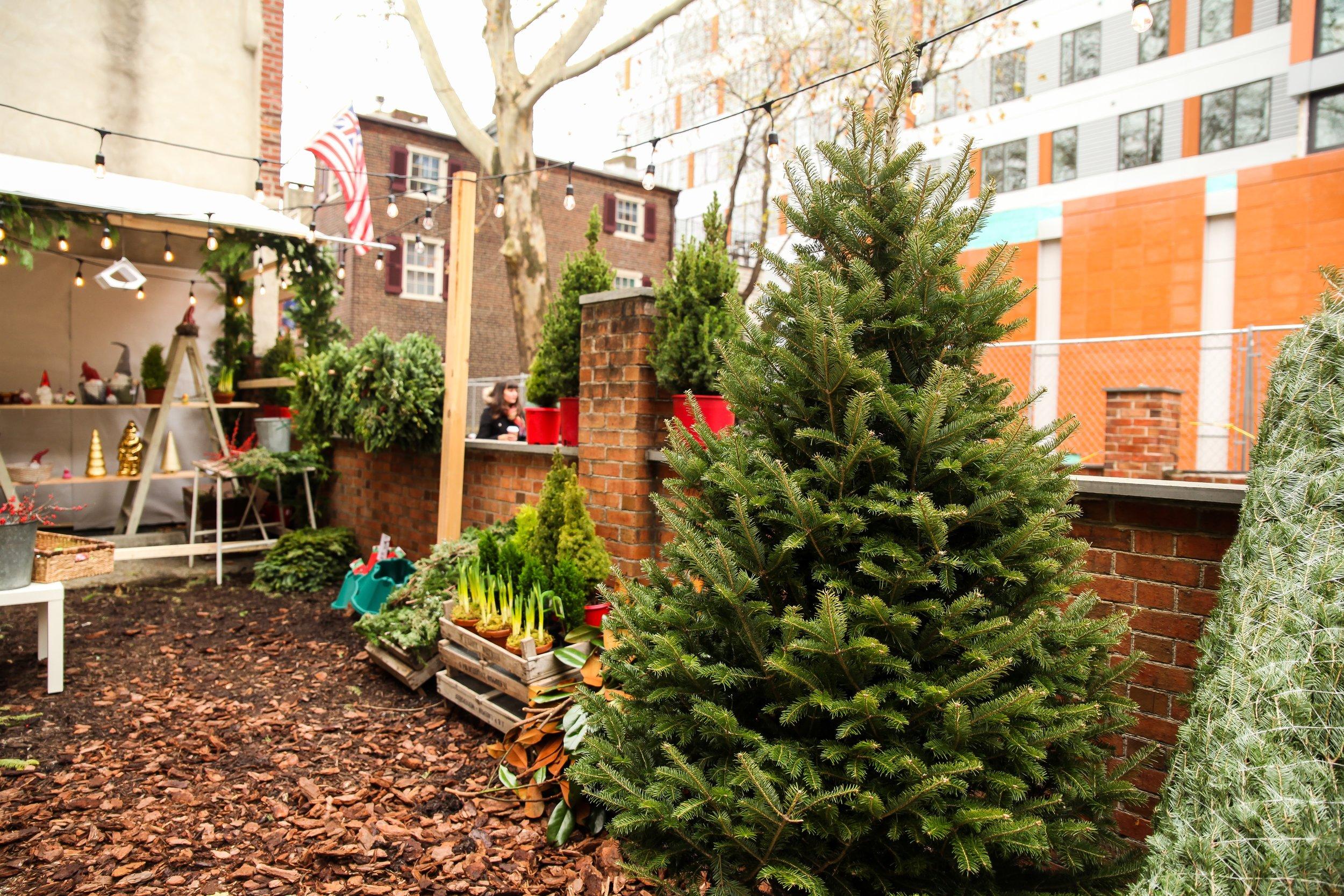 Old City Christmas Tree Sale