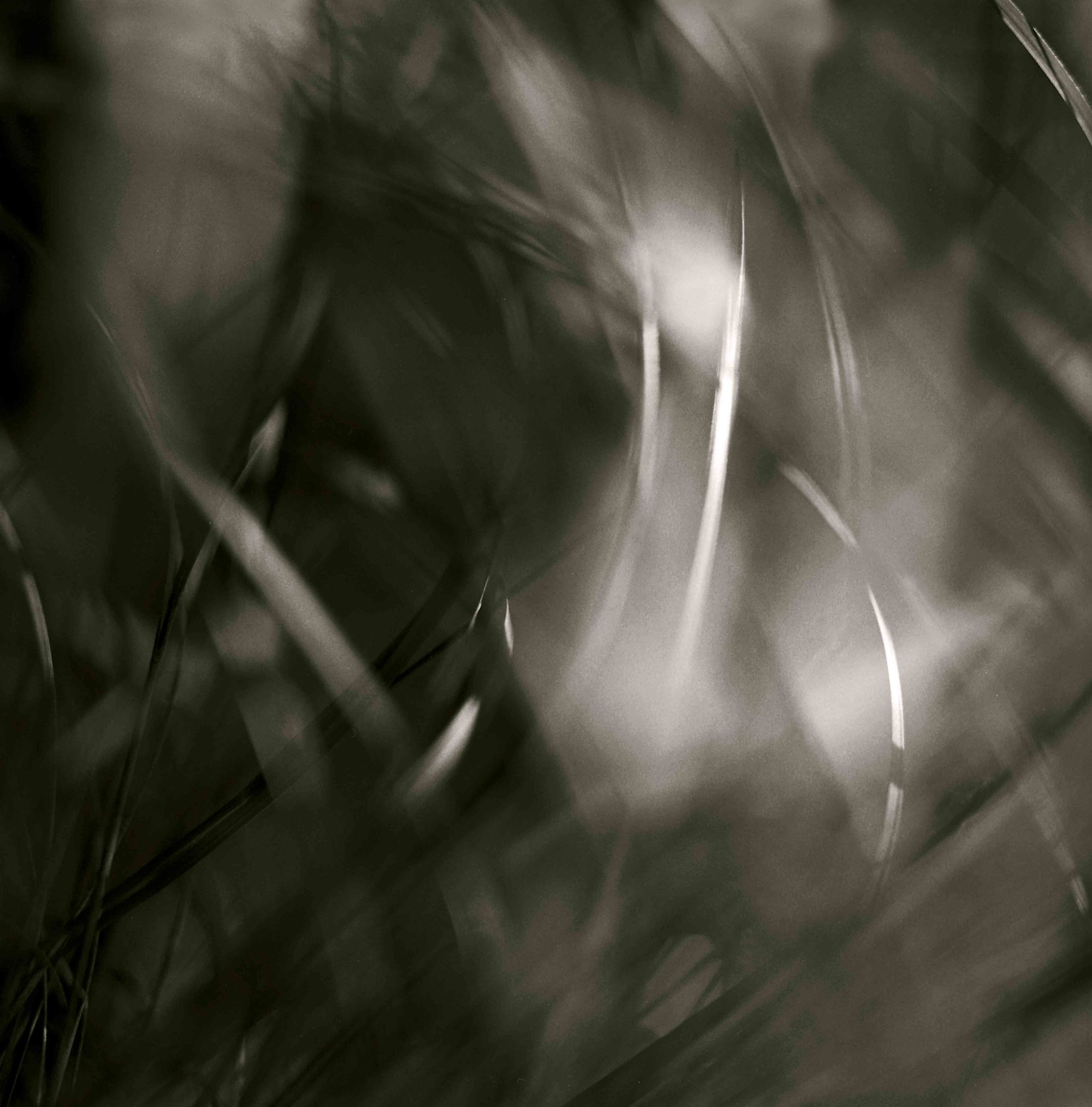 Forest LIght #16, 1992 b.jpg