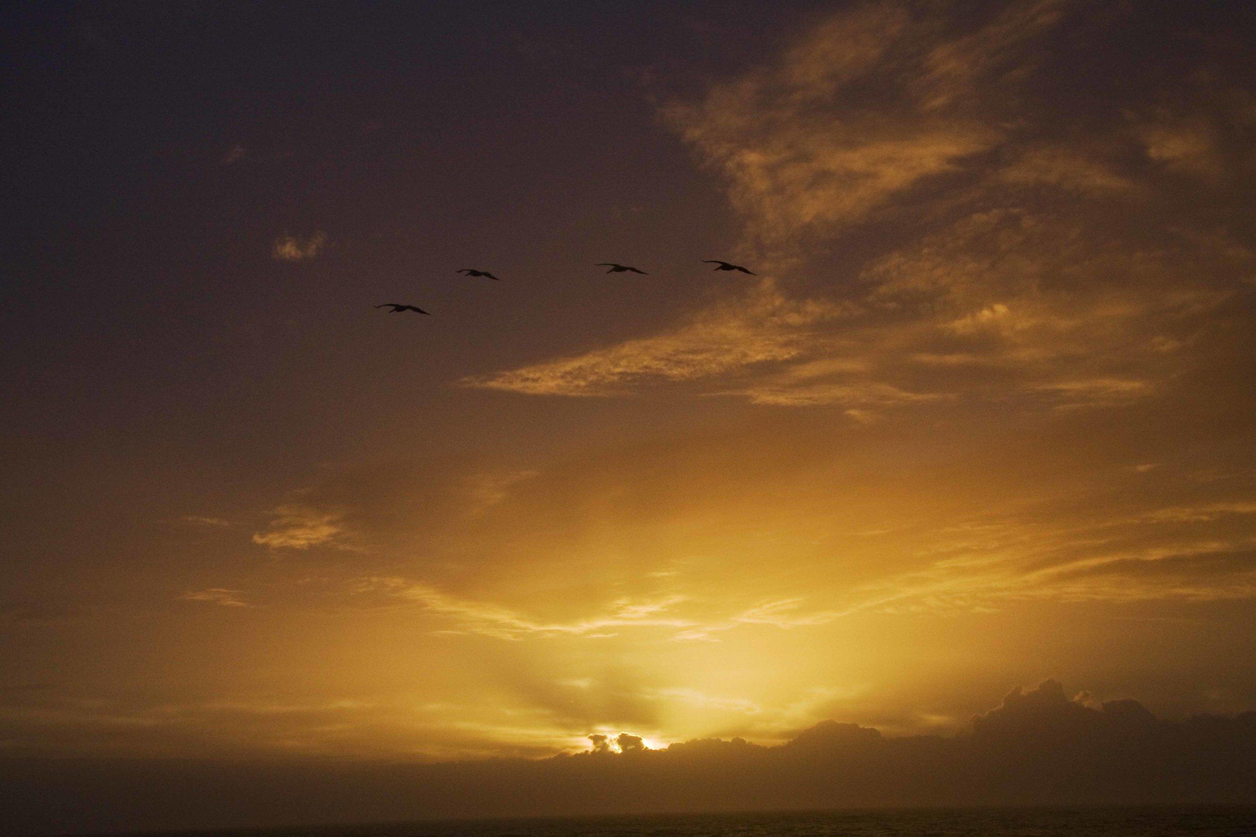 Sea of Light #15, 2012_1.jpg