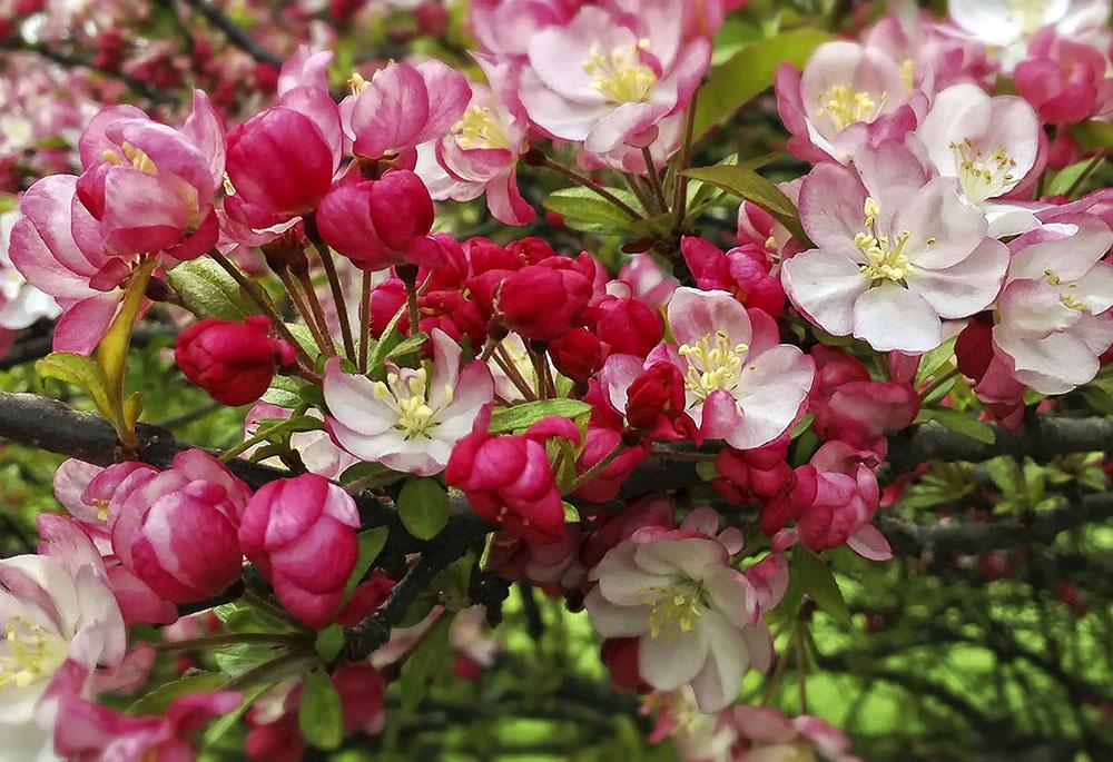 flower-Edit-Edit.jpg