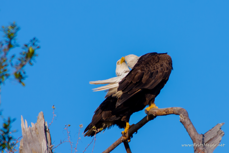 Baytown Eagles
