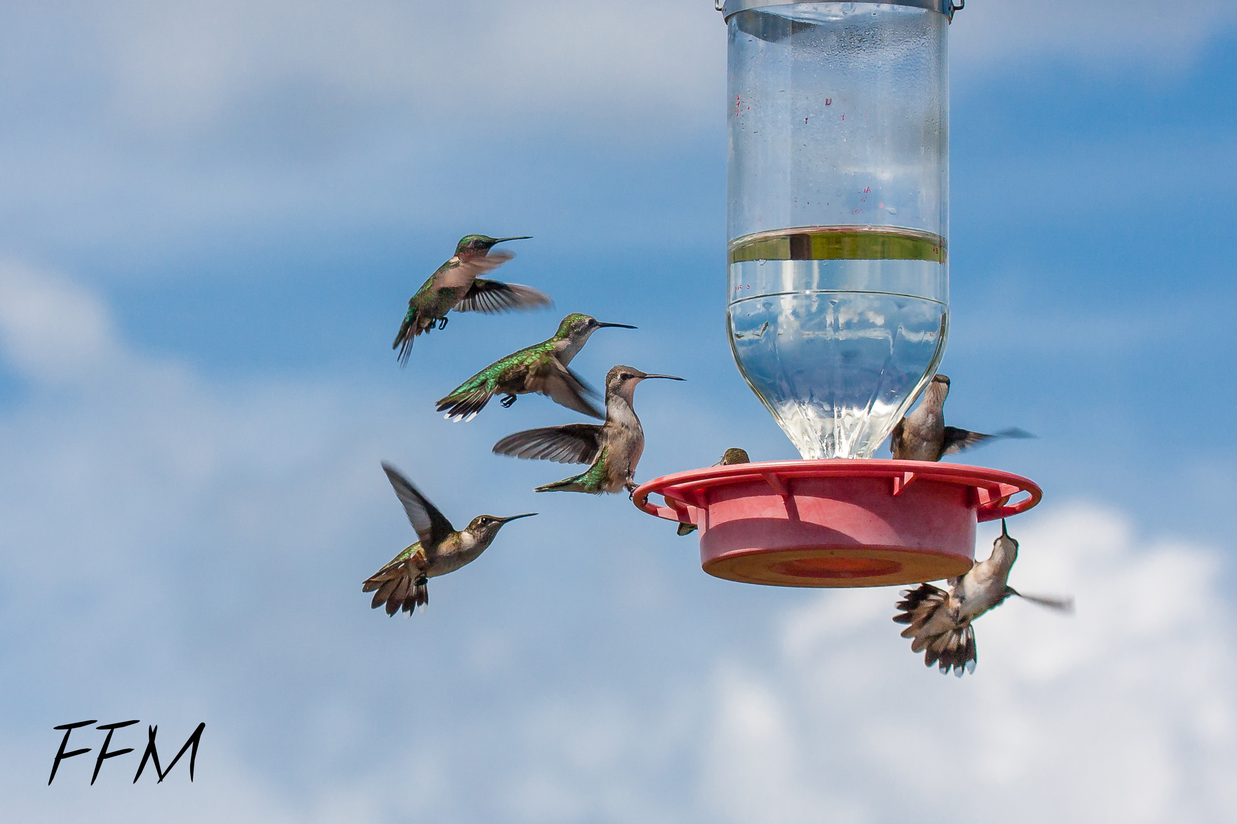 Hummingbirds at Smith Point Hawk Tower