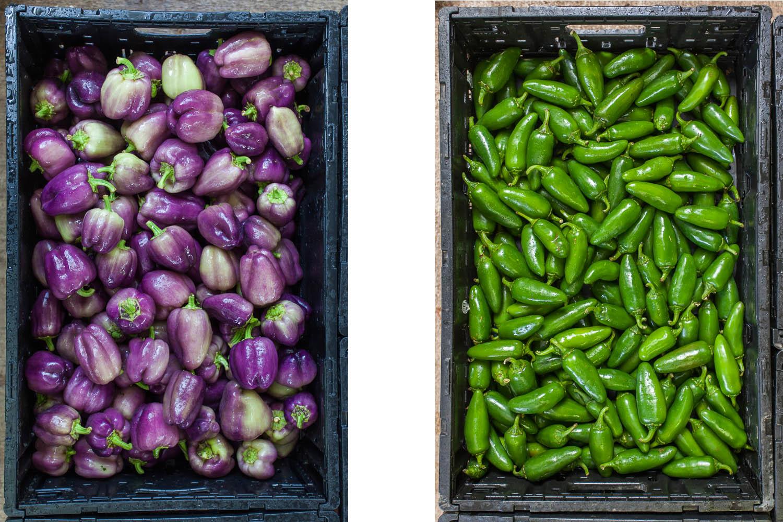 purplepeppersjalapenos.jpg