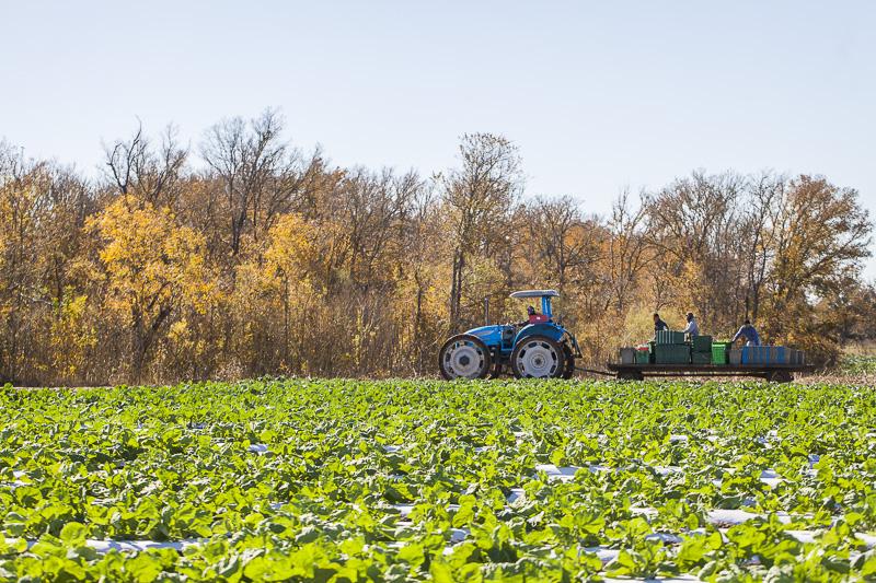 A blue tractor pulls a cart full of harvest bins at at Johnson's Backyrad Garden, Austin, TX.
