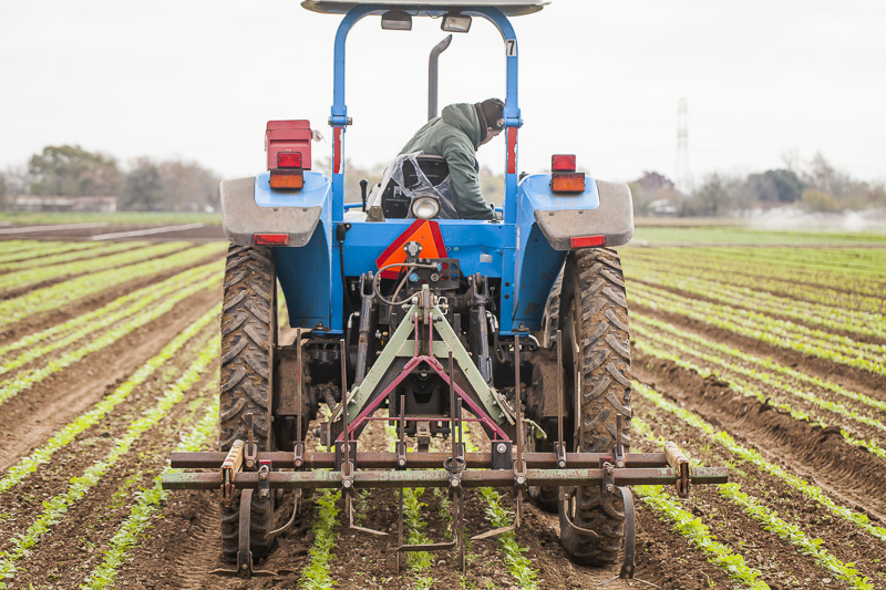A man drives a tracor along the rows of a crop using a tool to disrupt and dislodge weeds at Johnson's Backyrad Garden, Austin, TX.