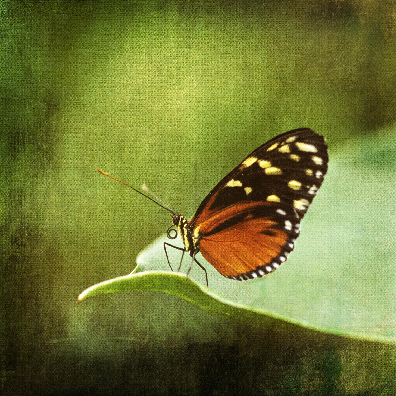 2butterfly_orange.jpg