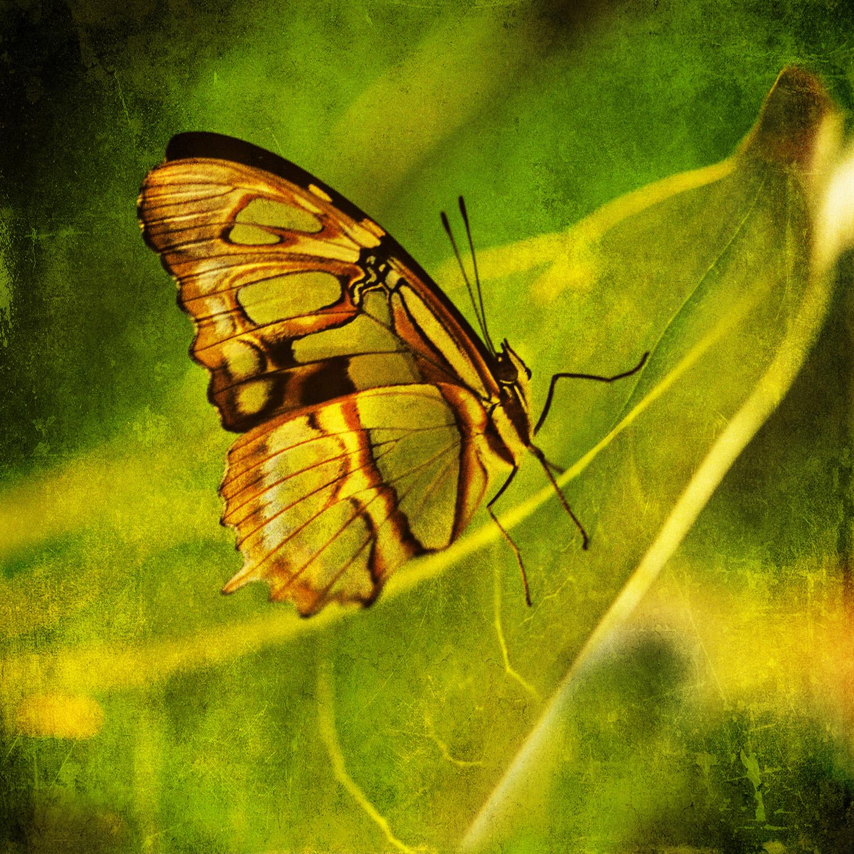 6butterfly_green.jpg