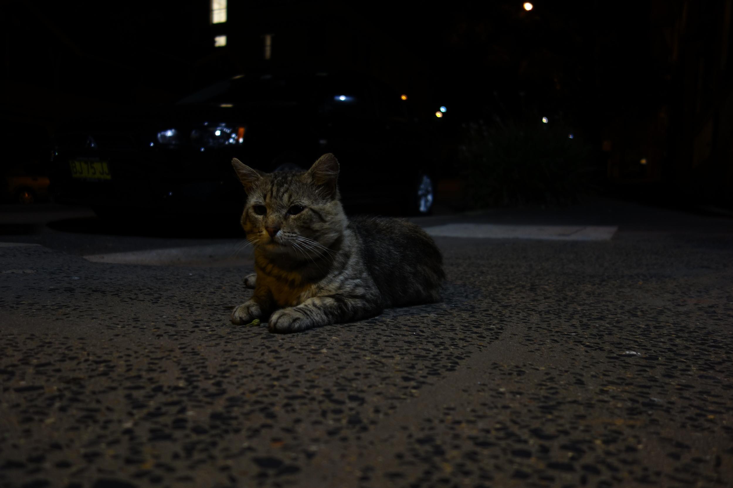 cat DSC04710.JPG