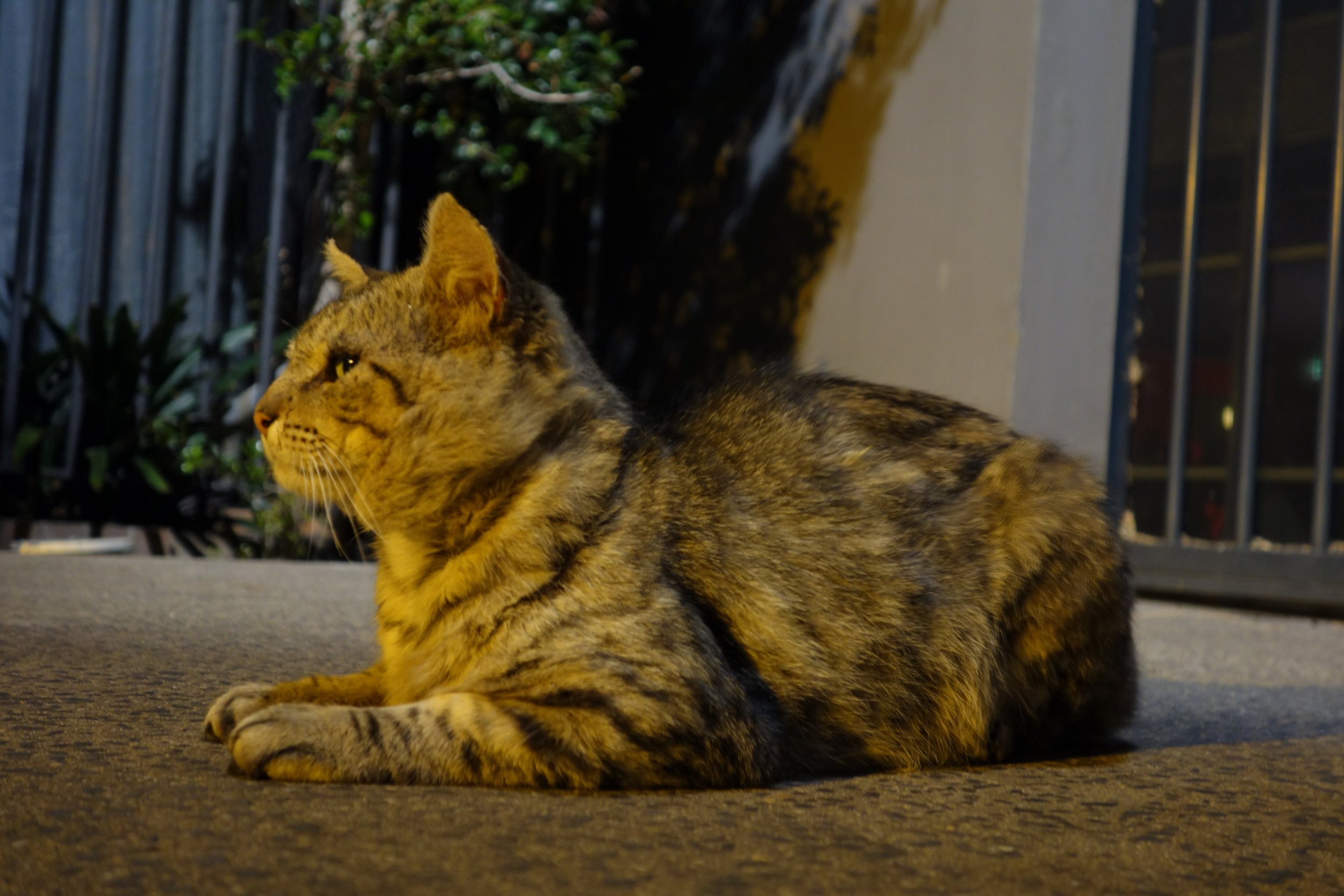 cat DSC04738.JPG