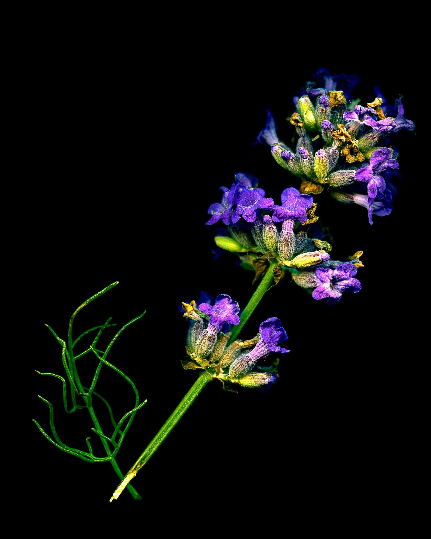 flowers007.jpg