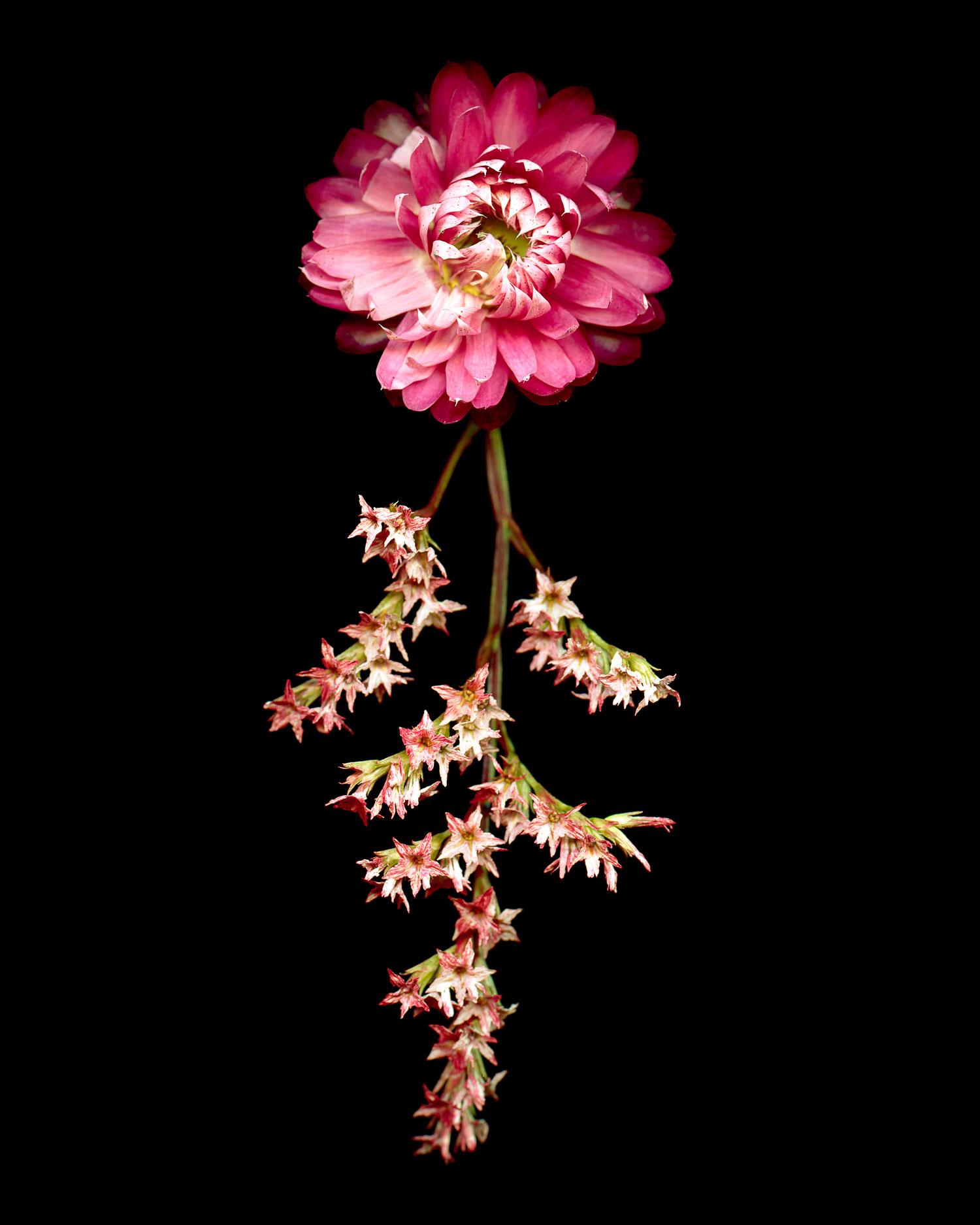 flowers008.jpg