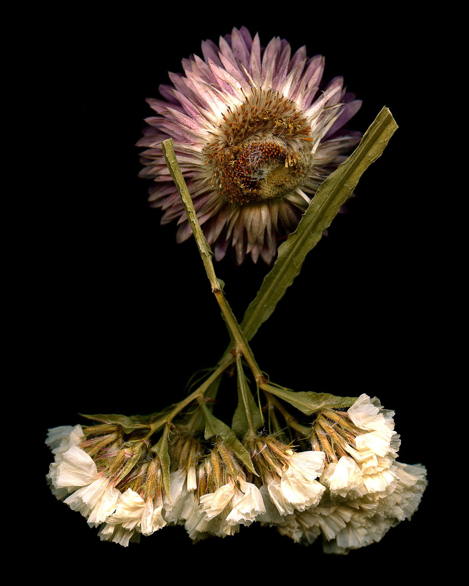 flowers011.jpg