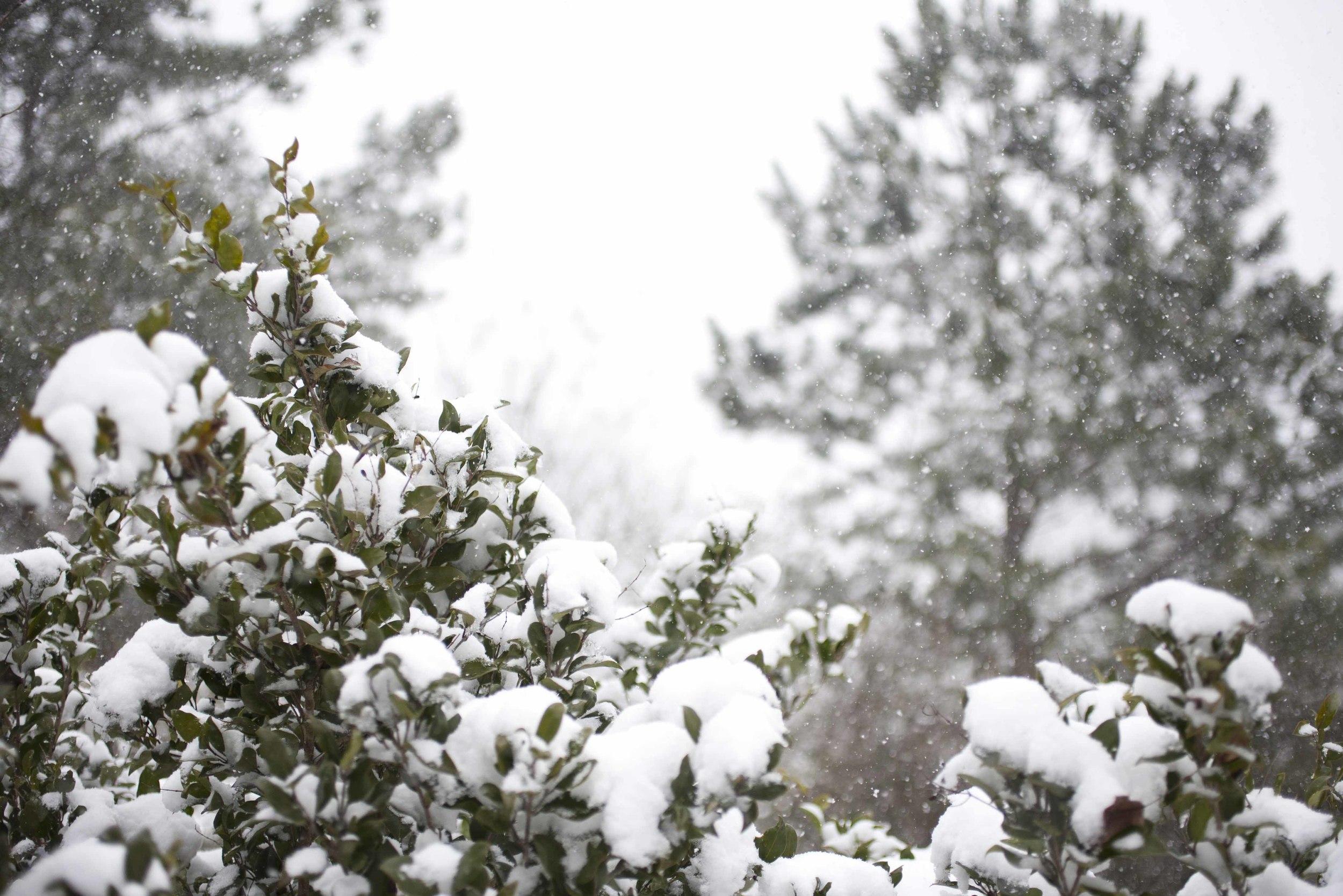 SNOW DAY ARIANA CLARE_5.jpg
