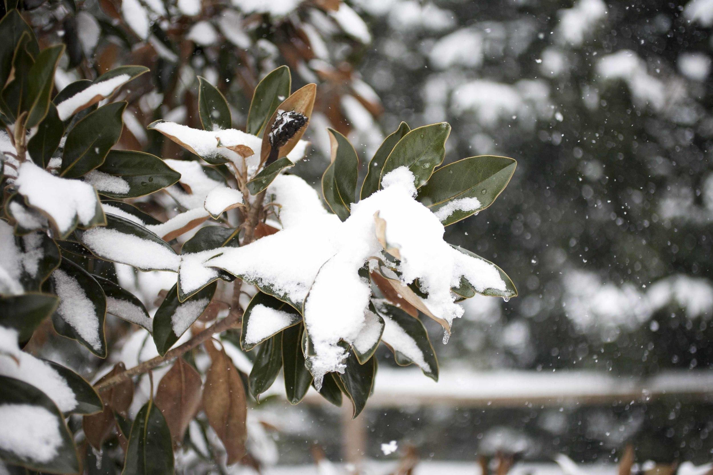 SNOW DAY ARIANA CLARE_11.jpg