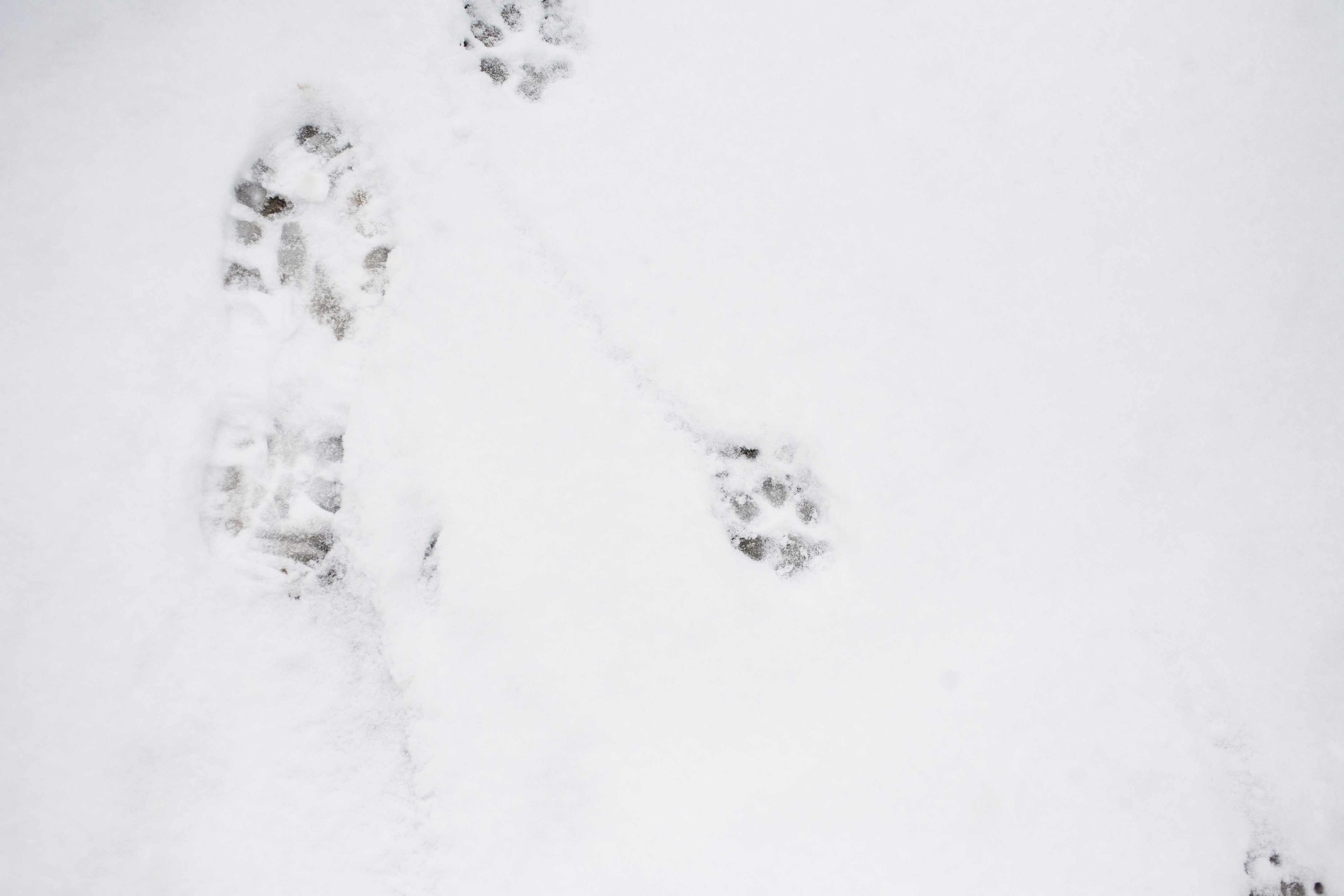 SNOW DAY ARIANA CLARE_14.jpg