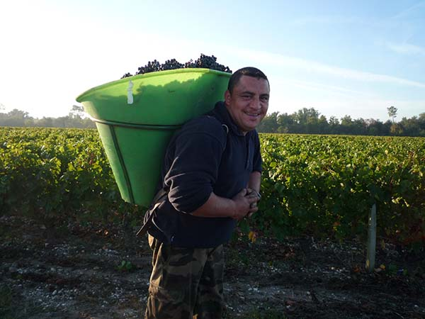 bordeaux_harvesting_2009.jpg