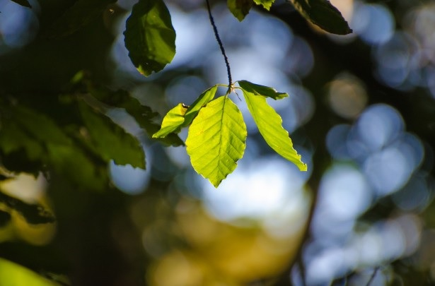 """The expression """"turn over a new leaf"""" actually refers to """"leaves"""" as pages in a book."""