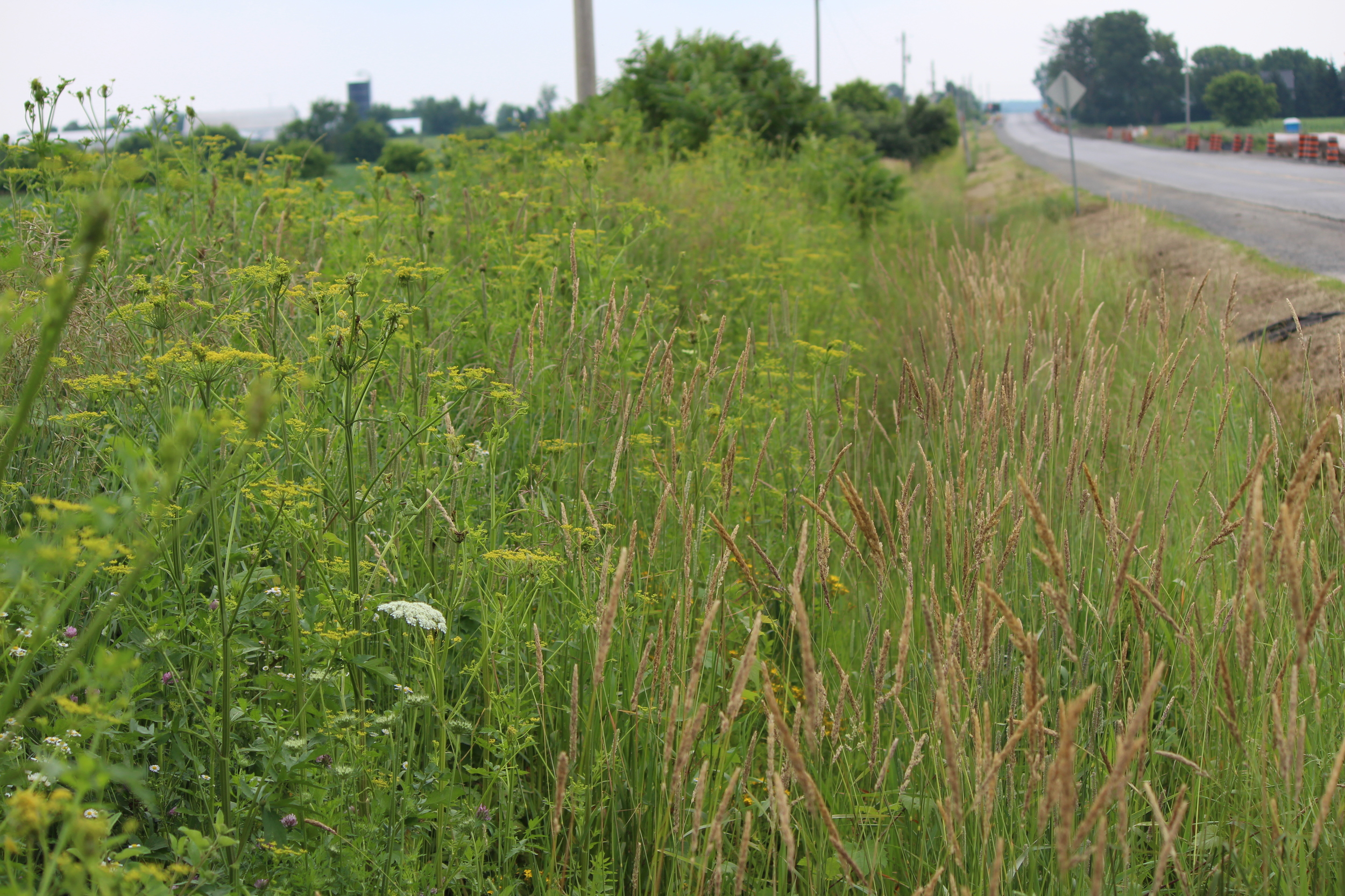 A common sight in roadside ditches throughout Rideau-Goulbourn.