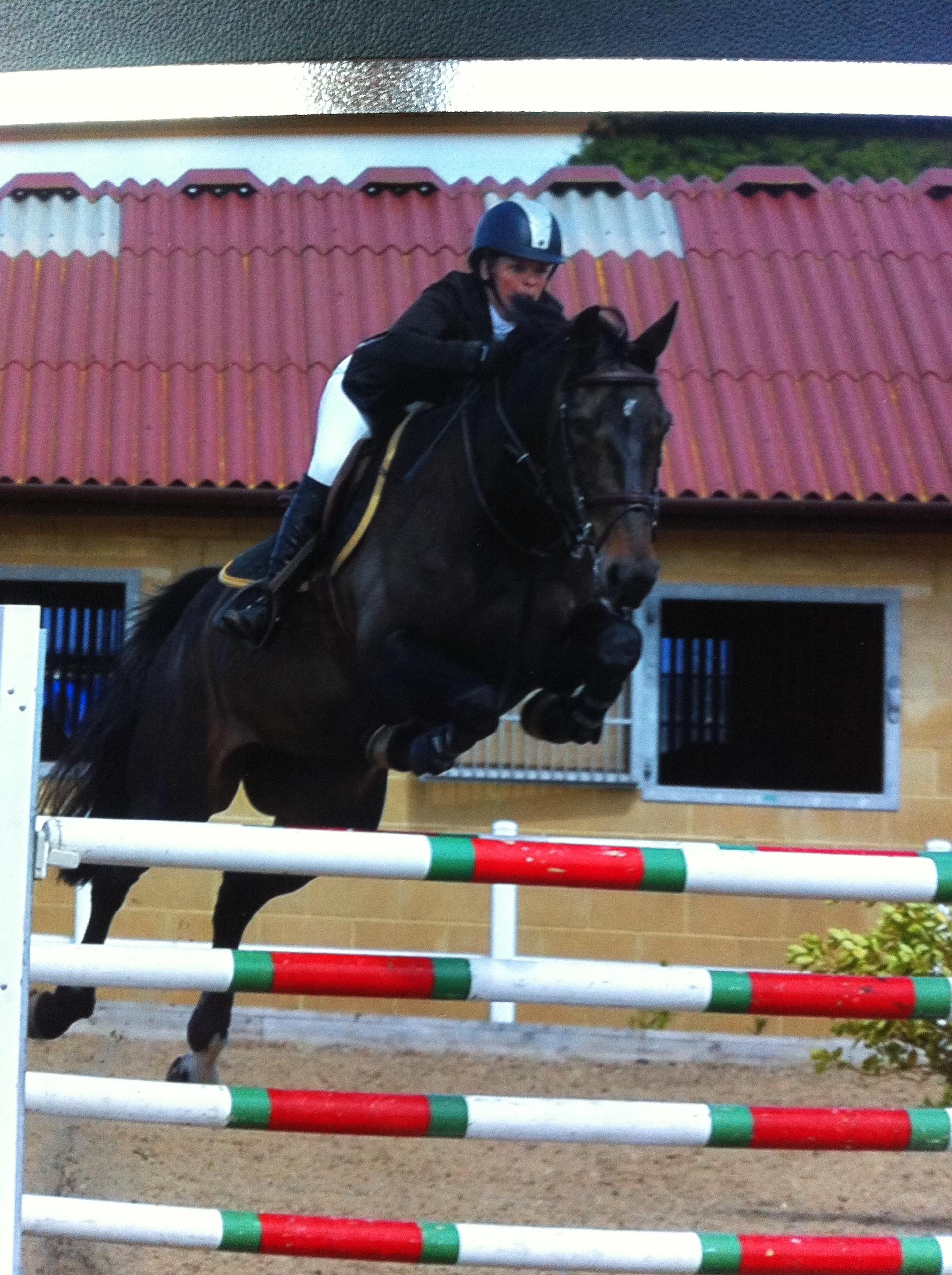 Balou 9yr old mare