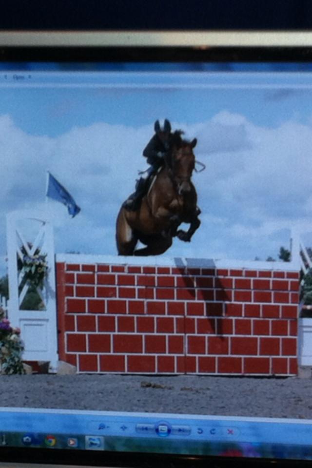 Calvaro B young horse champs