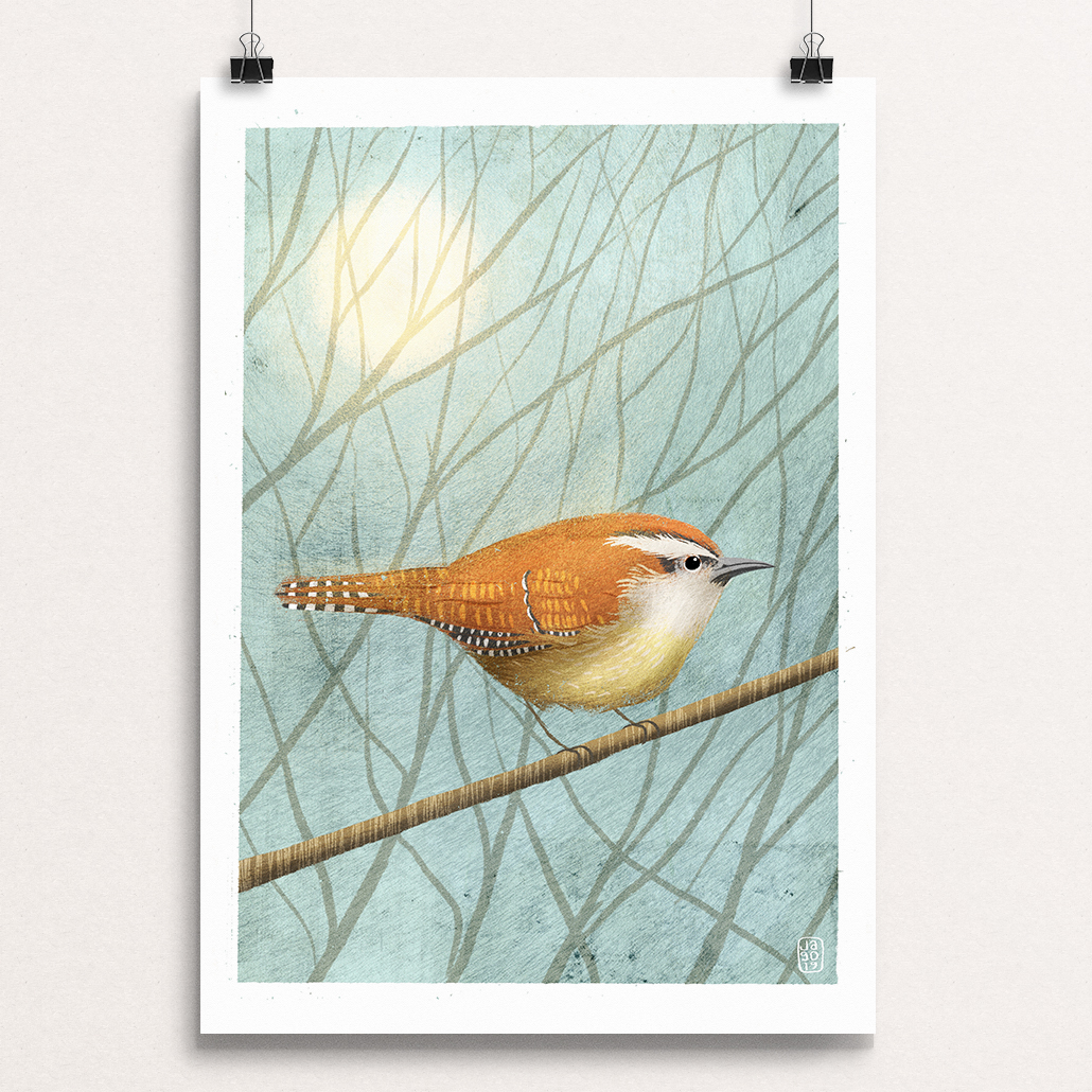 09 20_Winter_Birds_Day_Nine_-_Carolina_Wren cips.jpg