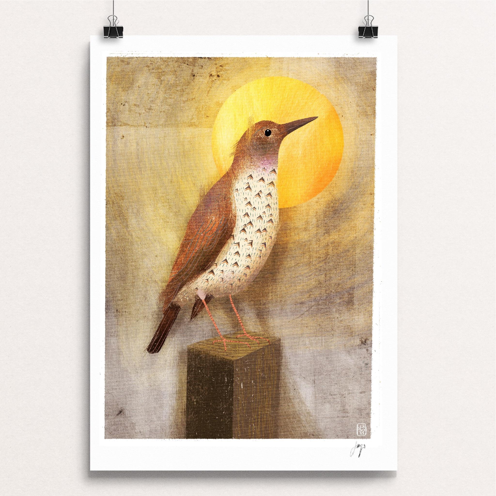 13 20 Winter Birds - Song Thrush.jpg