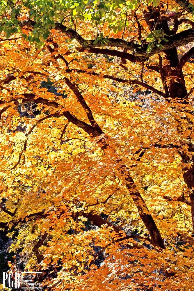 Leaves Like Fire.jpeg