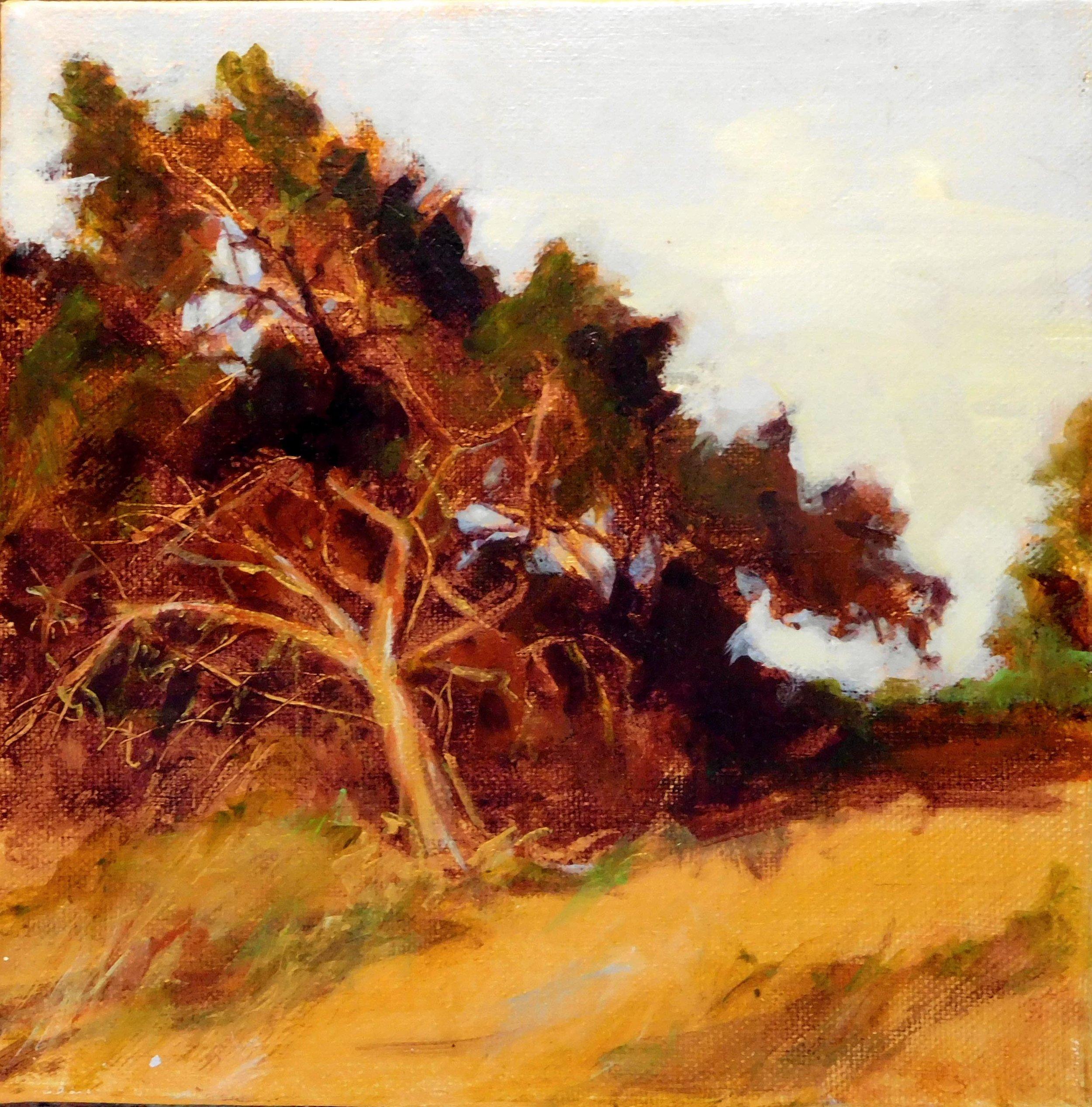 Mesa Cedars