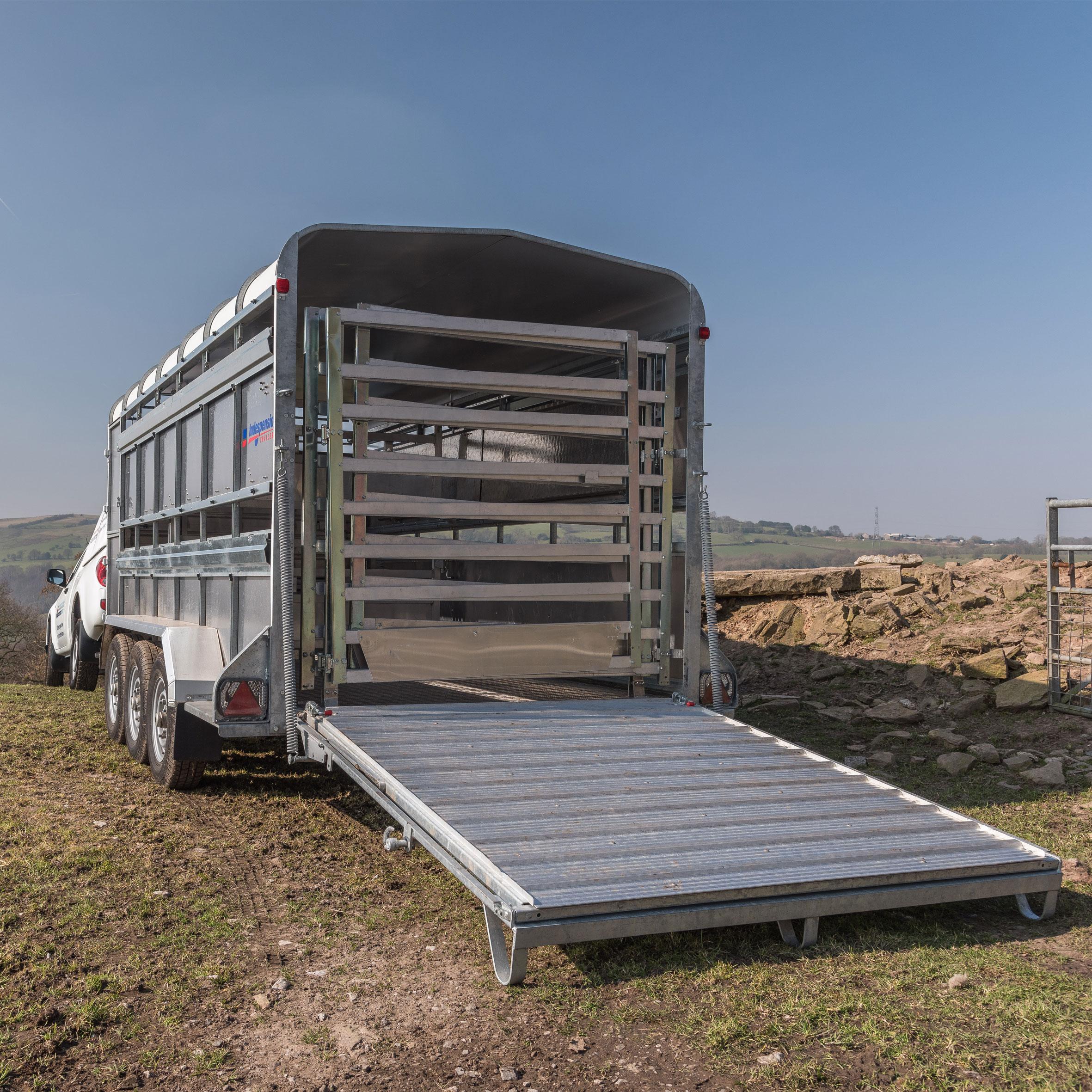 Livestock-Just-Arrived-Image-1.jpg