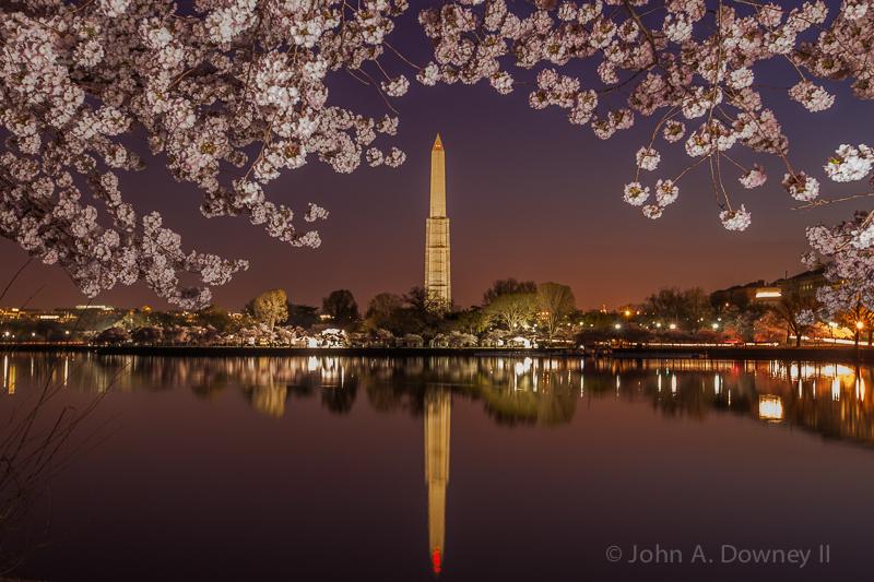 Cherry Blossoms-43.jpg