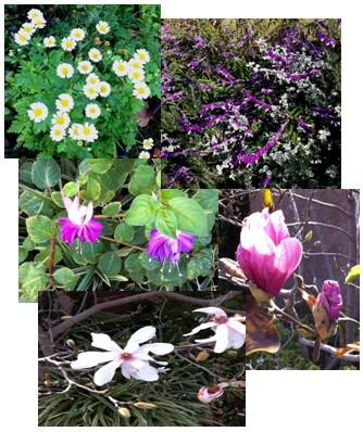 Garden+collage.jpg
