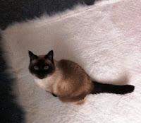 Cat+on+mat.jpg