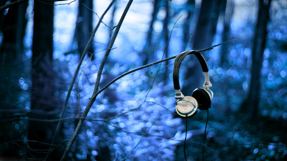 headphones_forest_branch_wire_morning_3906_1920x1080blue+flip (1).jpg