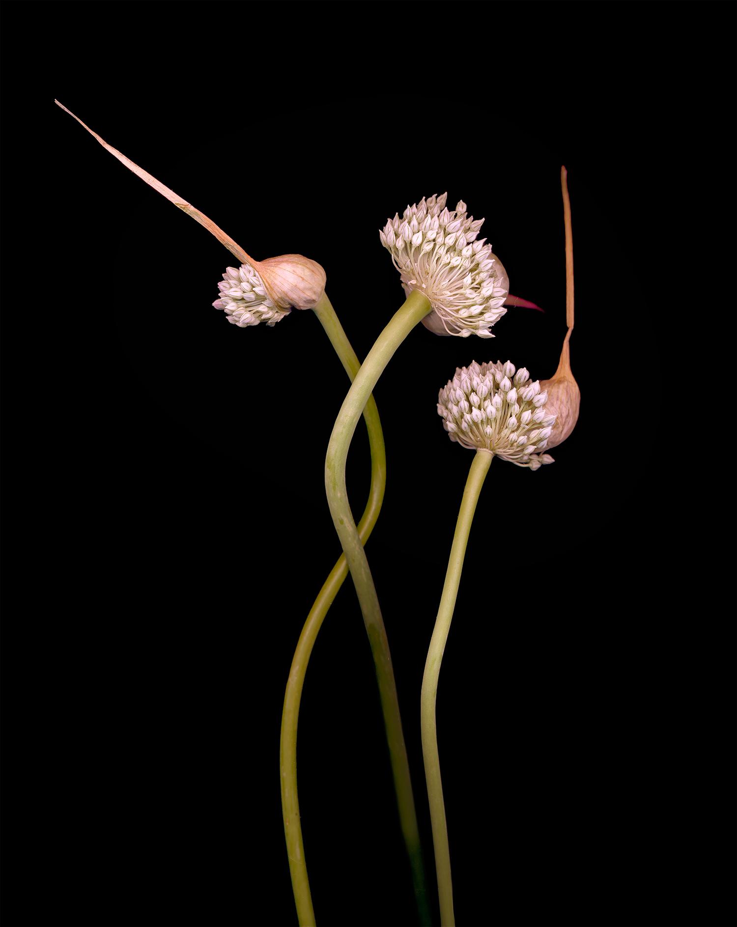 onion-tango.jpg