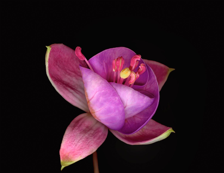 lavender&pink-fushia.jpg