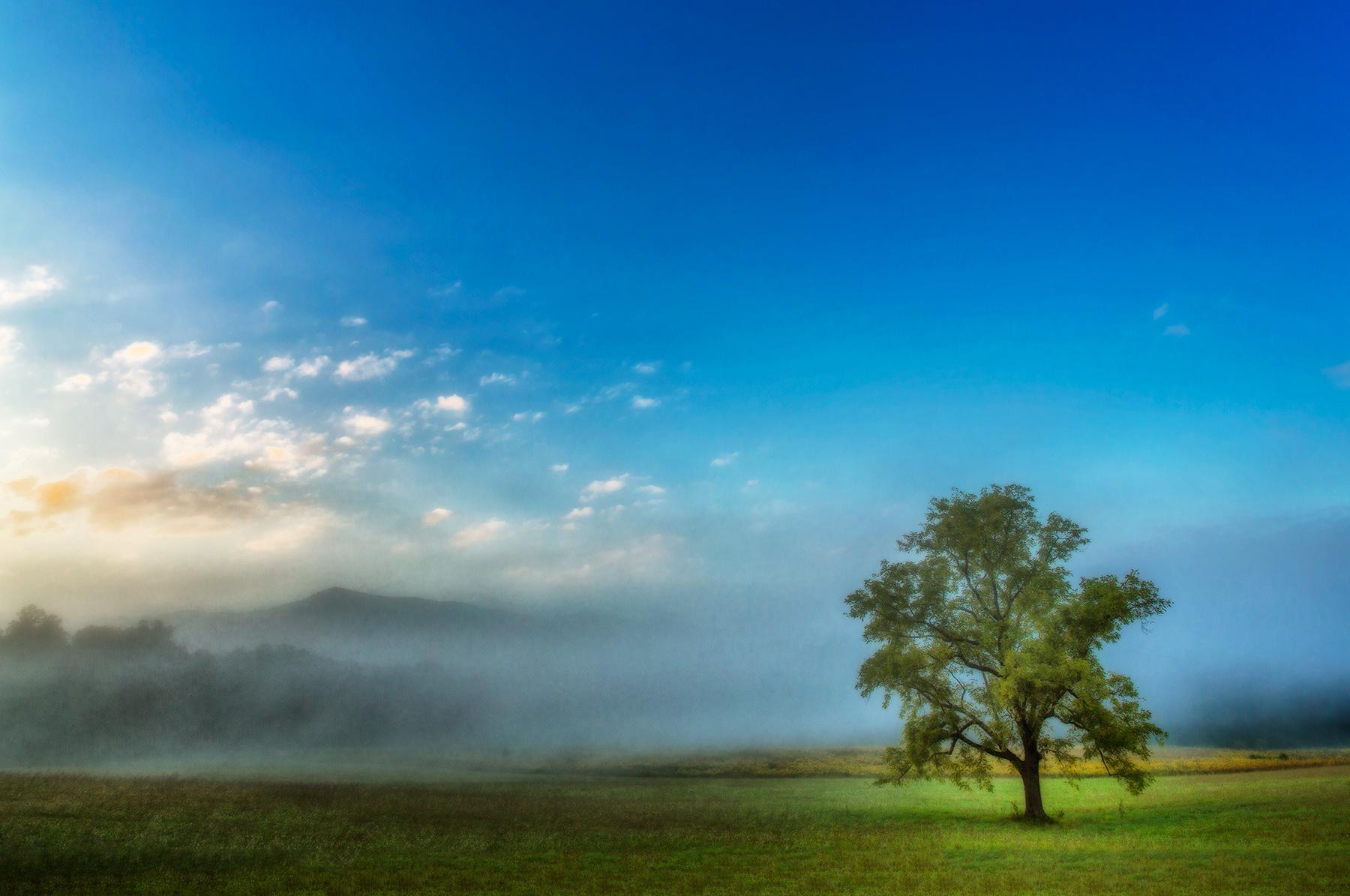 lone tree at sunrise.jpg