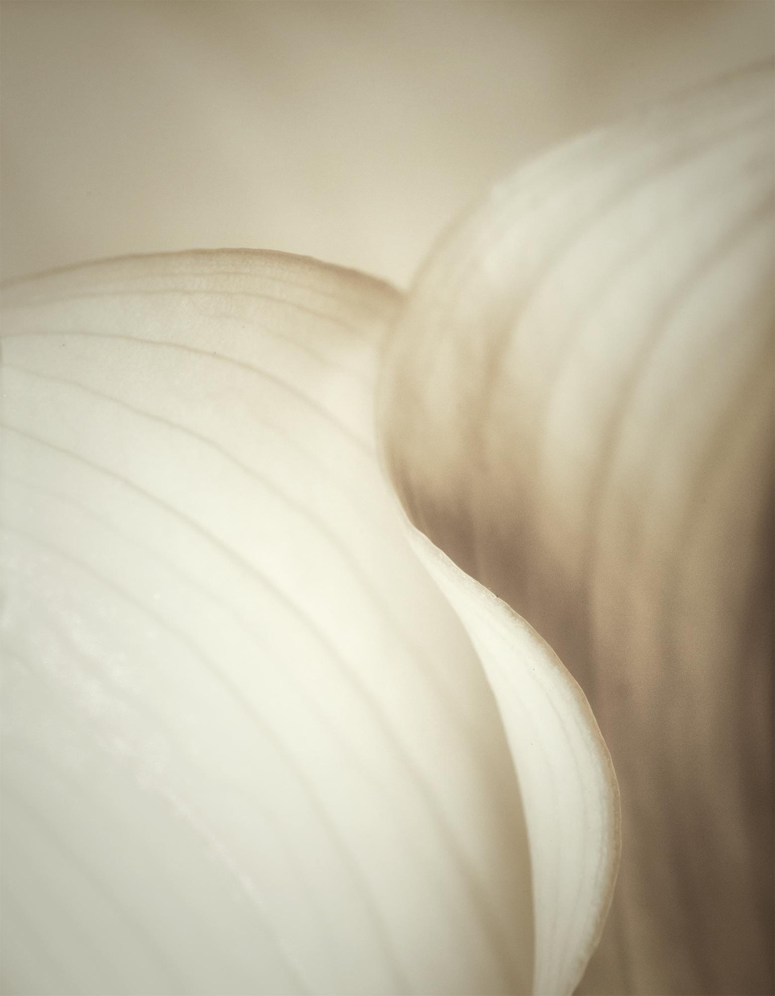 calla curves portraitpsd.jpg