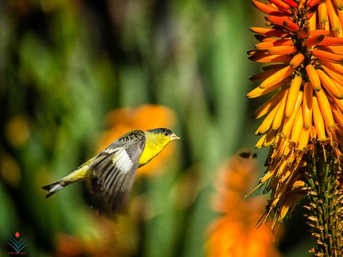 Small Bird - Huntington Gardens.jpg