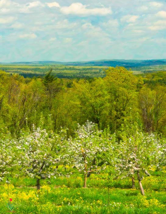 Nashoba Valley from Sholan Farms - Spring 2013.jpg