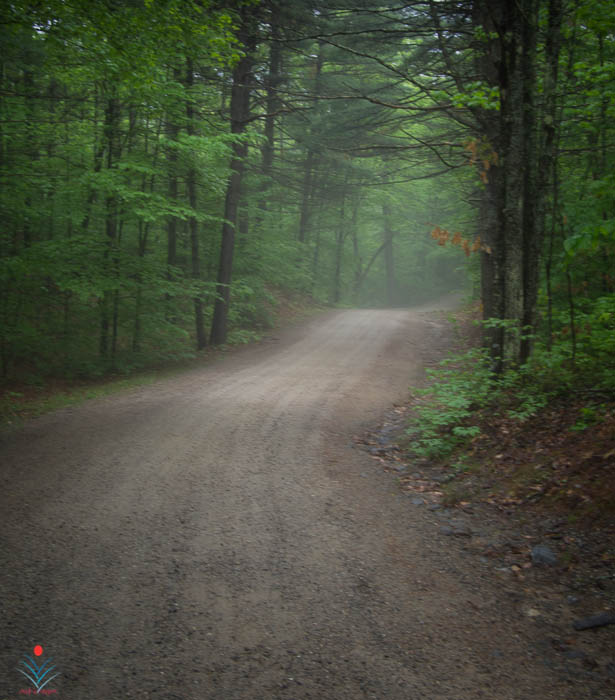 Danforth Road - Misty Evening.jpg