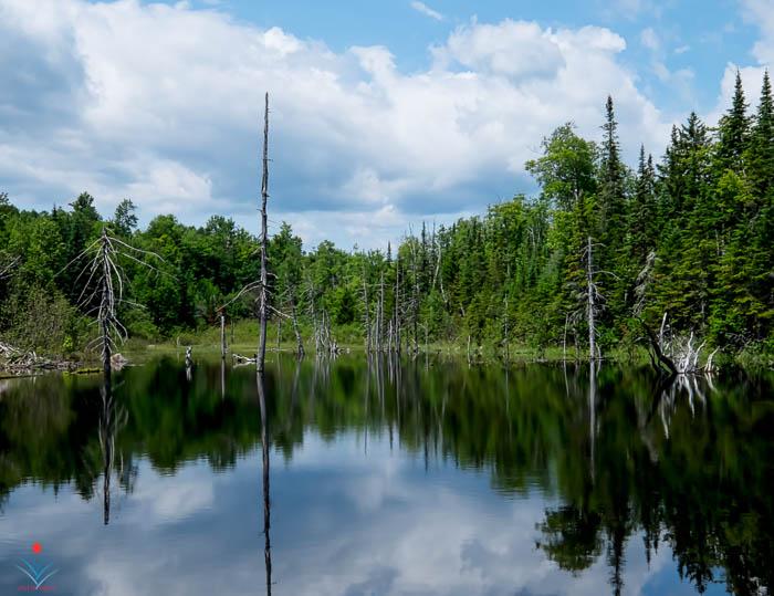 Beaver Pond - Jerico Mountain